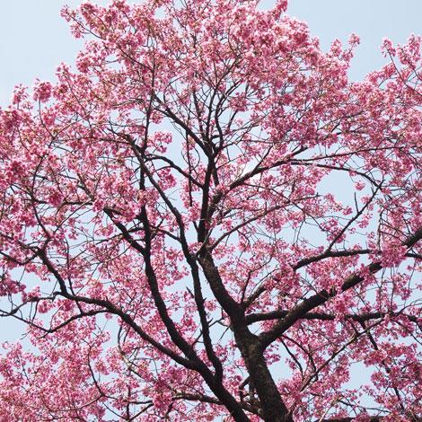 100322_spring