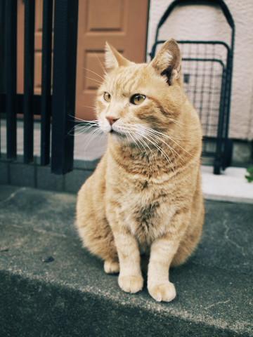 101021_cat